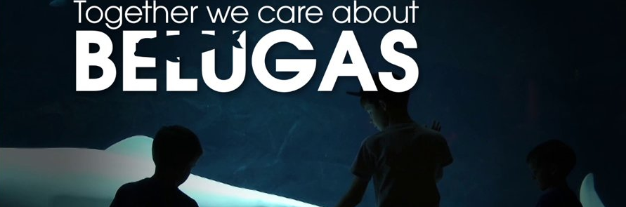 Together We Care About Belugas